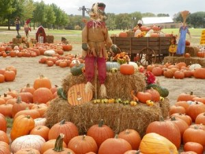 pumpkin-patch-1476723327